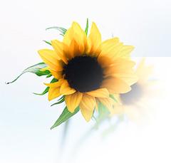 Share_flower